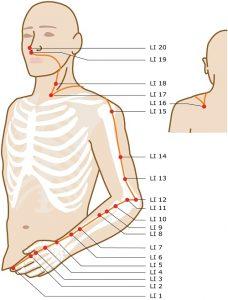 Séquence Yin Yoga pour les méridiens du poumon et large intestin.