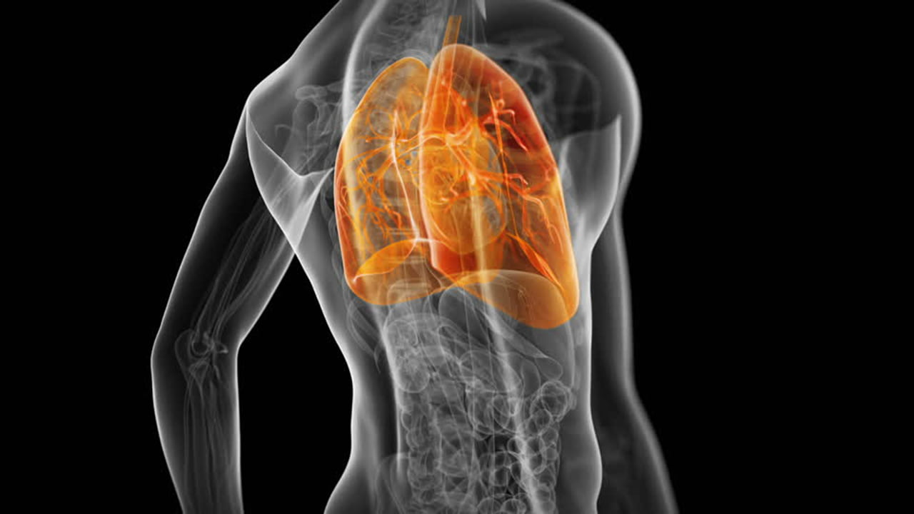 Comment les poumons «gèrent» la pratique du Yoga?
