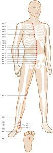 Séquence Yin Yoga pour les méridiens du Rein et de la Vessie